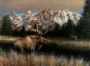 Teton Majesty